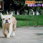 草なぎ剛の愛犬くるみちゃんが可愛い!散歩中の写真がフライデーに?